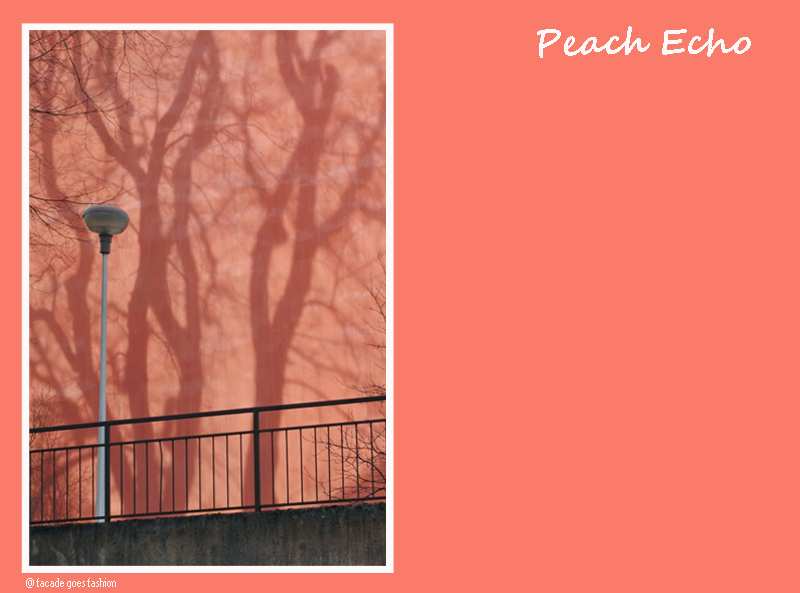 Salmon wall  Pantone 2016 Peach Echo