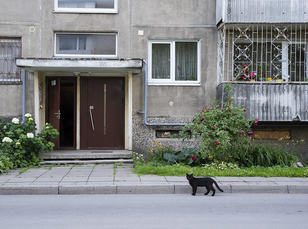 Kissa Dainava